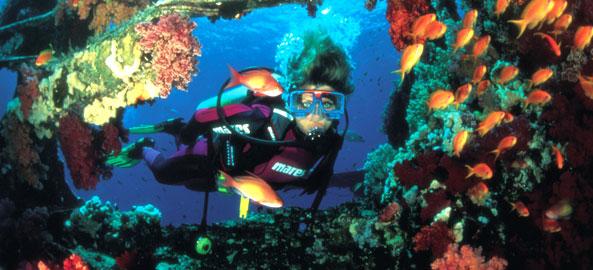 Nurkowanie Hawaje